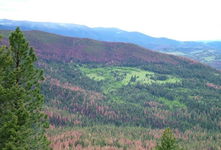 Dartmouth study provides new knowledge for managing tree-killing bark beetles