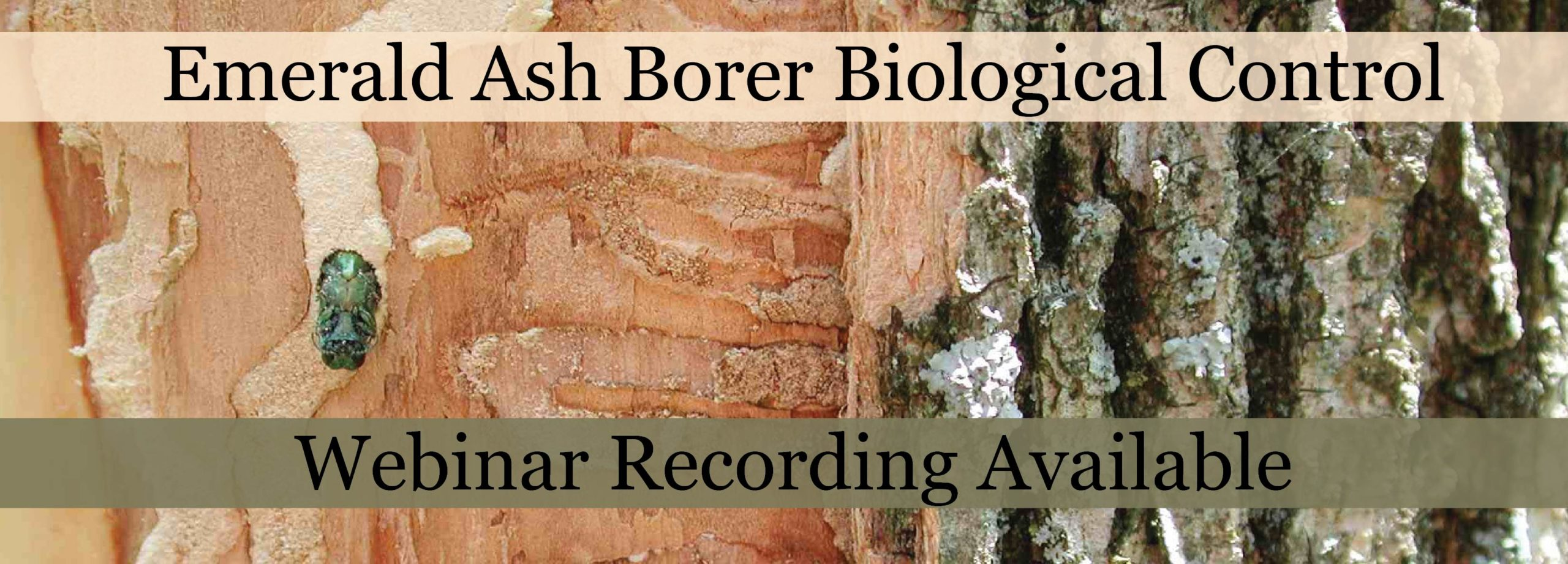 EAB-Biocontrol-Banner-01-scaled